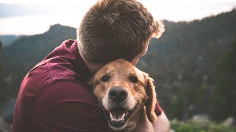 ¿Por qué los perros nos siguen a todas partes? Estos son los verdaderos motivos