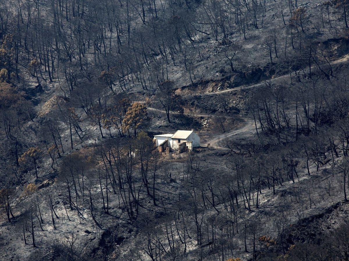 Foto: Las llamas han calcinado los bosques de Sierra Bermeja, en Málaga. (EFE)