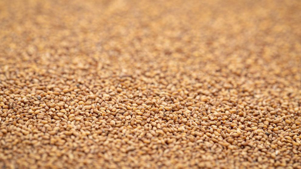 Teff, el cereal remineralizante y sin gluten que está de moda