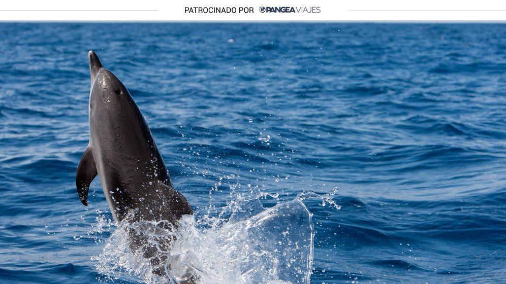 Foto: Se pueden ver delfines en el Mediterráneo (Shutterstock)