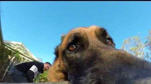 Un perro roba una cámara GoPro y escapa de sus dueños