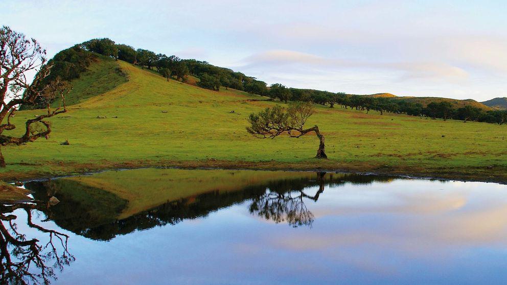 Edimburgo, Madeira, Carcasona... Cinco planes para tus próximas escapadas