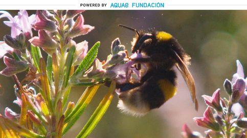 ¿Quieres saber qué tiempo va a hacer? Escucha el zumbido de las abejas