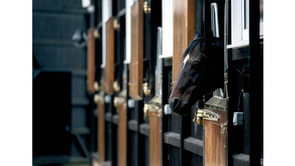 Purasangres: la nobleza del caballo de carreras se cría en Newmarket