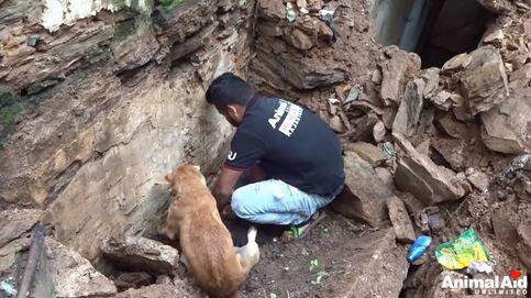 Una perra salva a sus crías tras conducir a los rescatadores hasta donde estaban enterradas