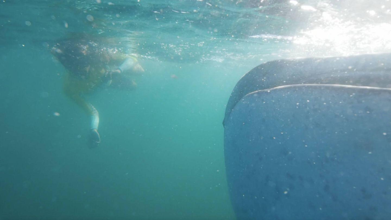 Lara Álvarez, junto a un tiburón ballena en 'Planeta Calleja'. (Cuatro)
