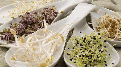Germinados de cebolla: el valor nutricional y su uso en la cocina