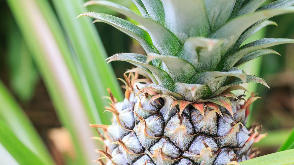 Así crecen algunas de las frutas y verduras más comunes