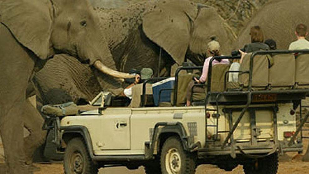 Botsuana ofrece safaris con licencia para abatir un elefante por 37.000 euros