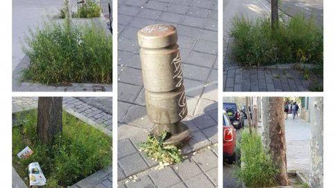 Hace un año prohibieron el glifosato: hoy tienen malas hierbas hasta en los bolardos
