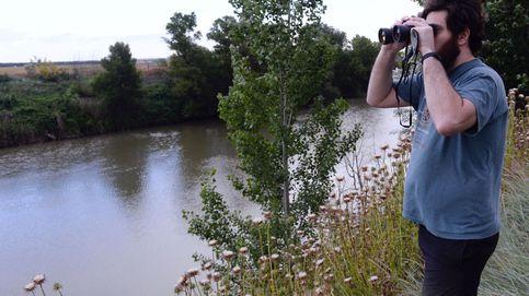 Las autoridades buscan a un cocodrilo avistado en Simancas (Valladolid)