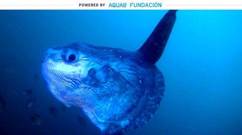 Este es el pez más tonto del mundo