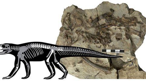 Un fósil robado en los Pirineos permite descubrir una nueva especie de cocodrilo
