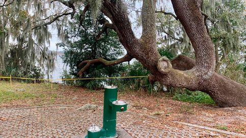 Florida acordona un parque para facilitar la orgía anual de las serpientes