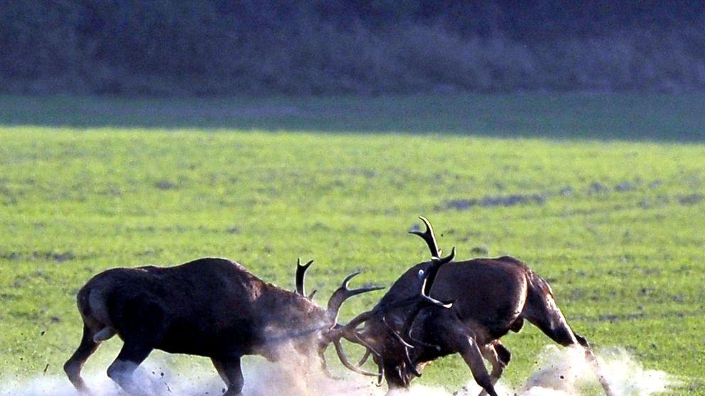 Temporada de caza: lo que separa a Juan Abelló de Juan March de la Lastra