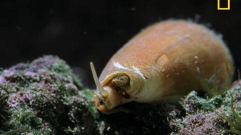 Encuentra una de las criaturas marinas más venenosas del mundo en su pecera