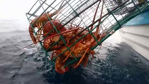 Cruzada en Reino Unido en pro de las langostas: aturdirlas para no cocinarlas vivas