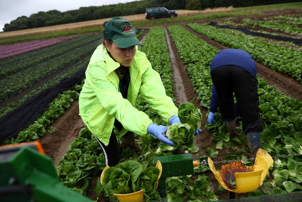 Foto: Trabajadores inmigrantes, en una granja de Kent, Reino Unido. (Reuters)