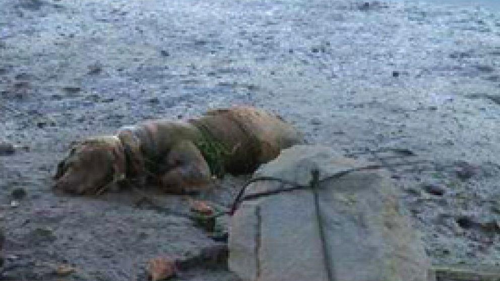 Detenido gracias a una denuncia en Facebook por matar cruelmente a su perro
