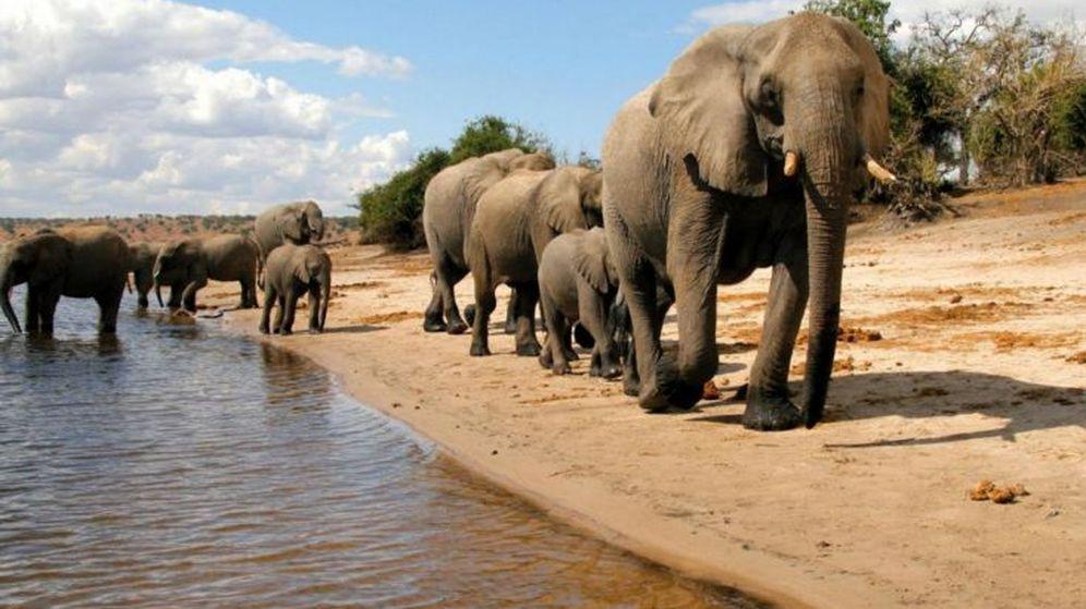 Foto: Elefantes en el Parque Nacional de Chobe (Foto: Turismo de Botsuana)
