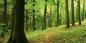 Foto: Un joven sin identidad aparece en Berlín tras pasar cinco años en el bosque