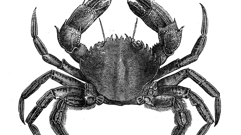 Los 'karkinos' de Hipócrates o por qué asociamos el cáncer a un crustáceo