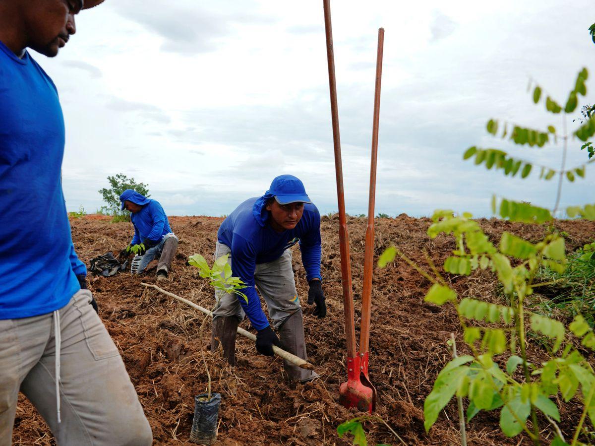 Foto: Proyecto de reforestación en el Amazonas. Reuters