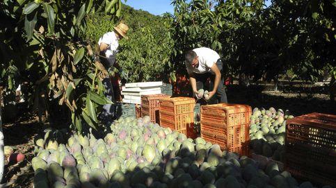 El informe sobre pesticidas de la UE y Mercosur que está leyendo el campo español