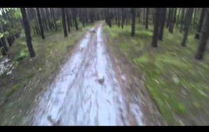 Un oso transforma un paseo en huida