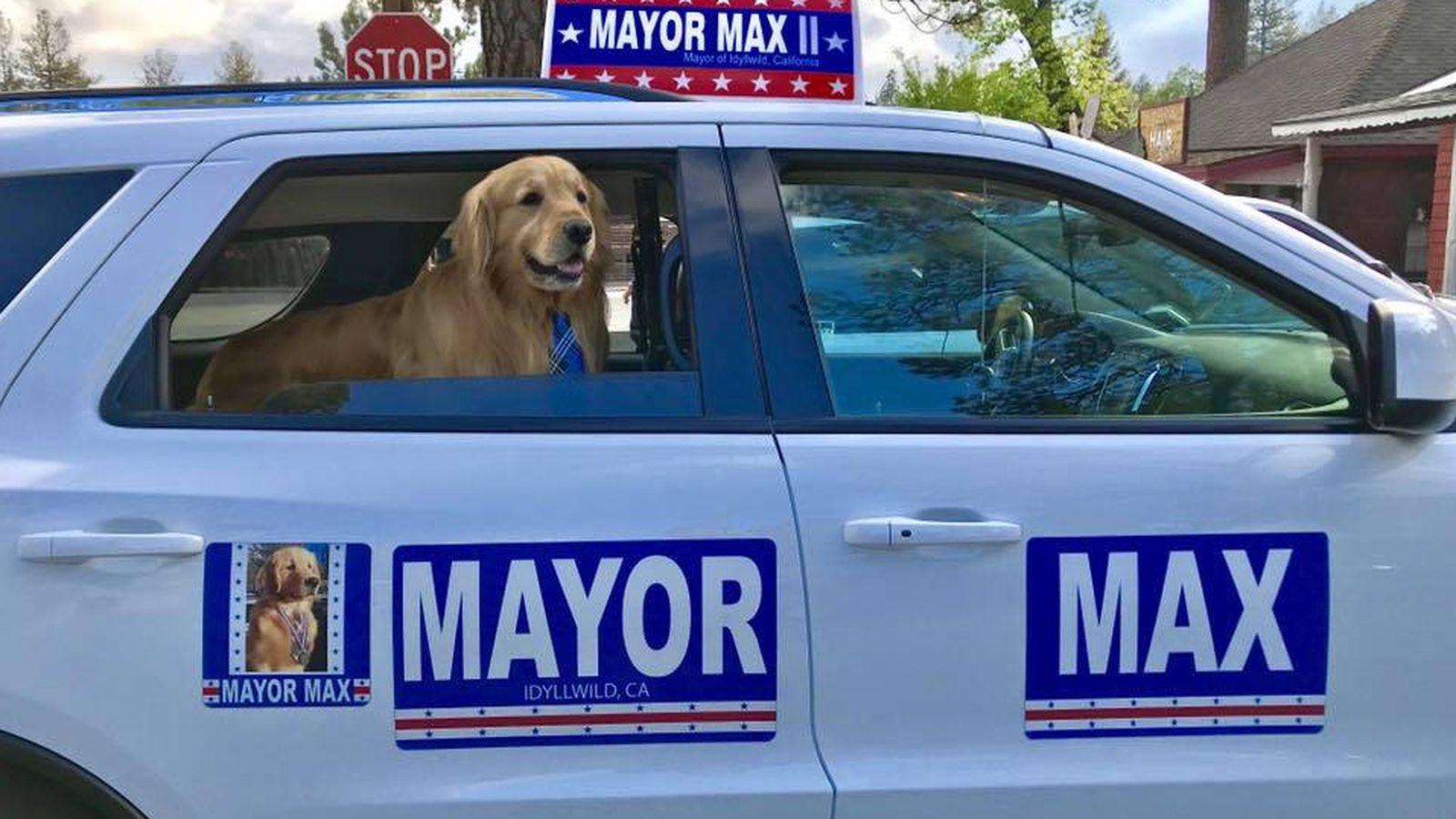 Foto: Max, en su coche oficial como alcalde de Idyllwild (Foto: Facebook)