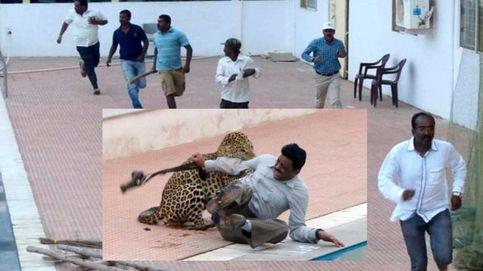 El brutal ataque de un leopardo en un colegio de la India que se ha convertido en viral en Youtube