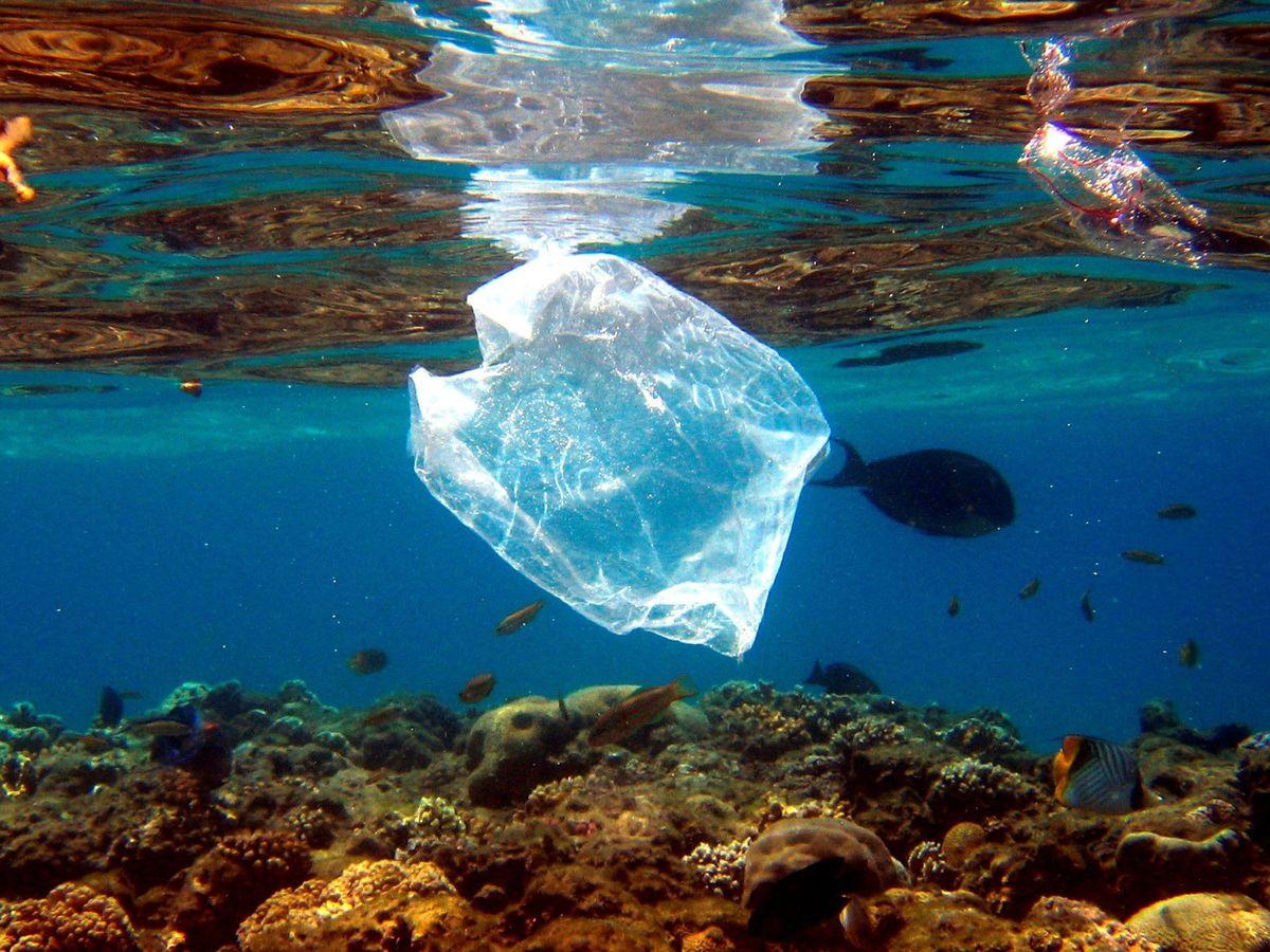 Foto: Contaminación por plástico en el Mar Mediterráneo. EFE