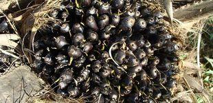 Post de Aceite de palma: la OCU recomienda no abusar de su consumo