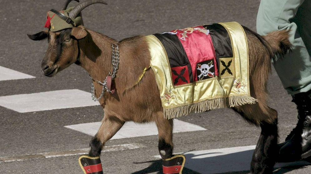 Foto: La cabra, mascota de la Legión. (EFE)