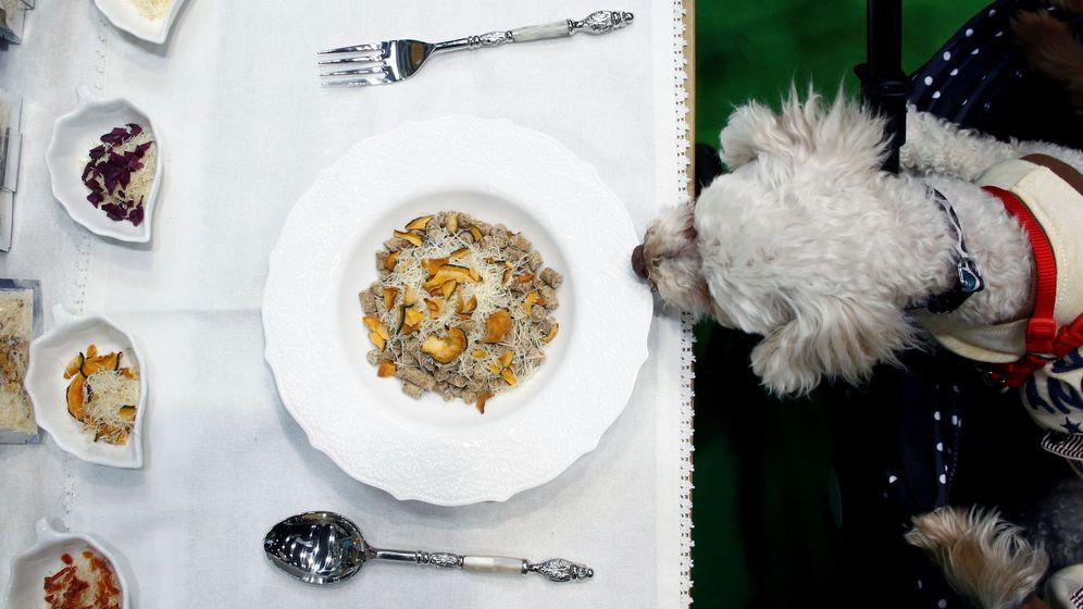 Foto: Un perro huele una comida orgánica para mascotas en la feria Interpets de Tokio (Kim Kyung-Hoon / Reuters)