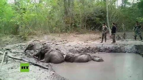 Así fue el complicado rescate de seis crías de elefantes en Tailandia