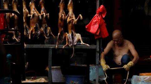 China inaugura su famoso festival de carne de perro en mitad de la pandemia