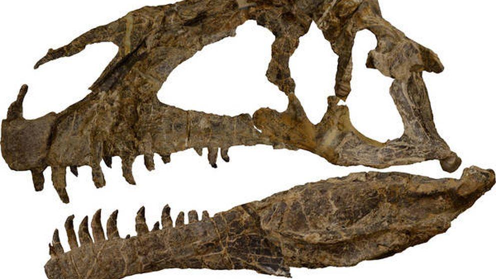 Descubiertos los restos de uno de los dinosaurios más temibles del Jurásico