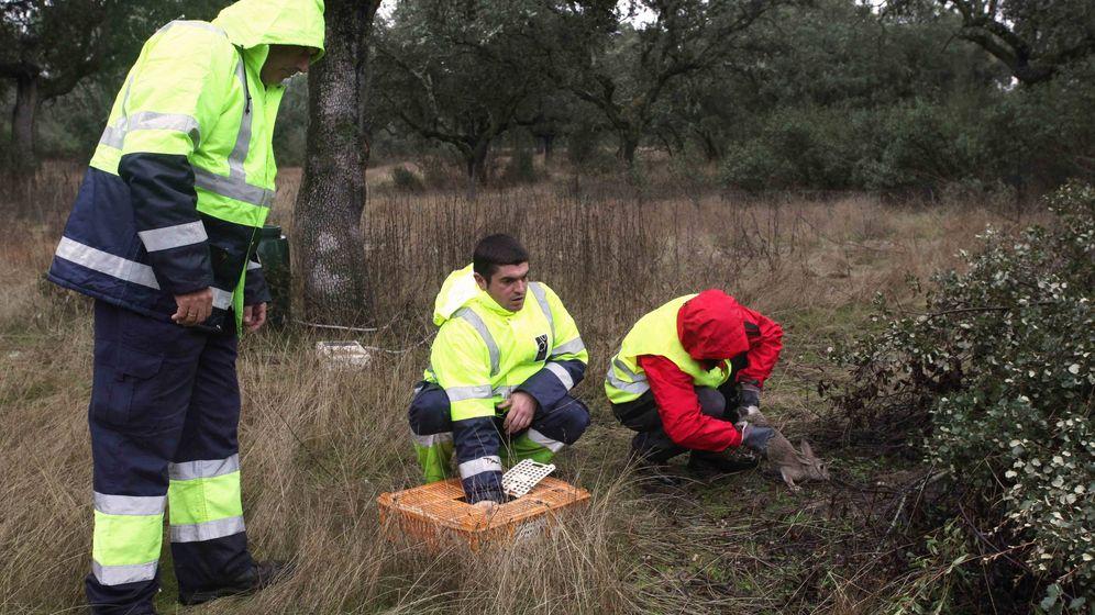 Foto: Control de la población de conejos por parte de la Comunidad de Madrid.