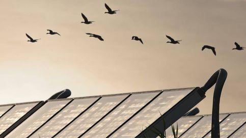 Cómo proteger la biodiversidad de los parques solares y eólicos