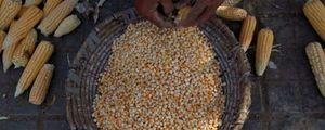 Cargill, el gigante silencioso que domina el comercio mundial de comida