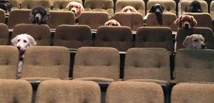 Post de La foto que encandila a Internet: perros de servicio viendo un musical