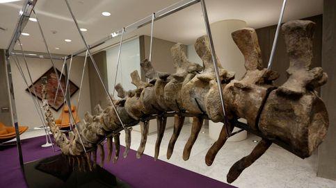 Hallazgo histórico: encuentran 15 vértebras de un dinosaurio gigante