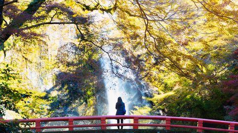 'Shinrin Yoku': el truco japonés para que tu salud sea mucho mejor