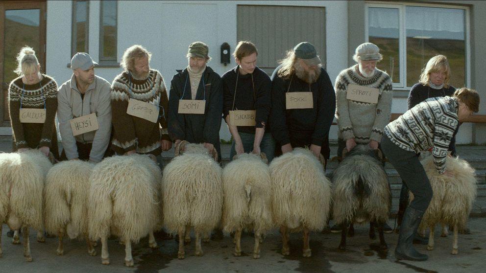 El cine islandés arrasa en la Seminci con 'Rams, el valle de los carneros'