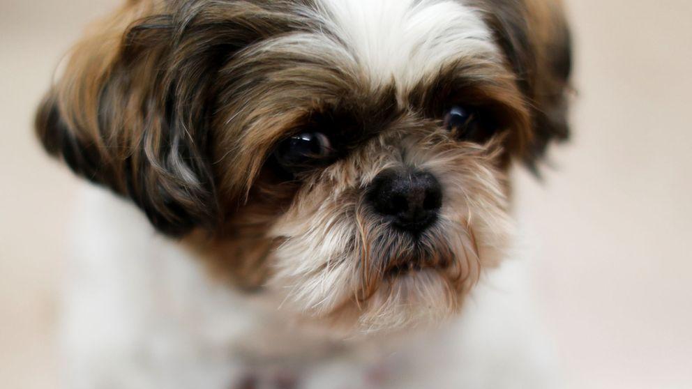 Matan a una perra completamente sana para enterrarla con su dueña