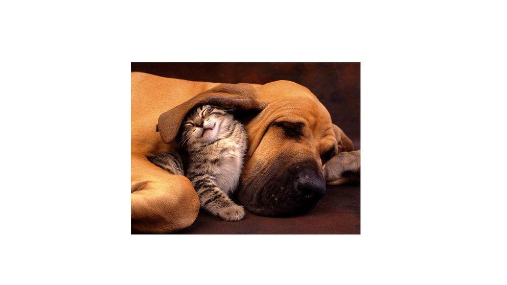 Gatos y perros, el amor es posible