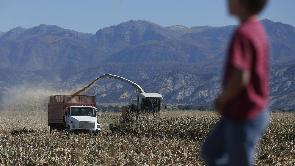 Trabajo infantil en el campo, el secreto mejor guardado de EEUU