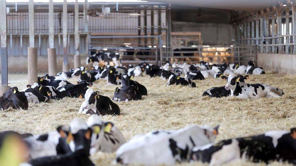 Pulso de la industria alimentaria para colgarse la medalla de bienestar animal