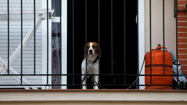 Un perro confinado. (Reuters/Jon Nazca)